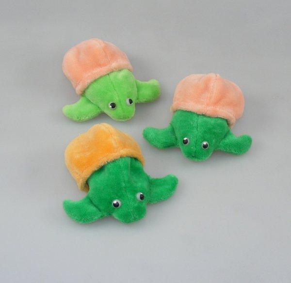 Törtel aus dem Ei, Baby-Schildkröte
